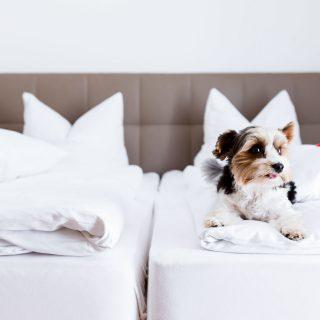 Hund auf einem Doppelbett in Dingolfing